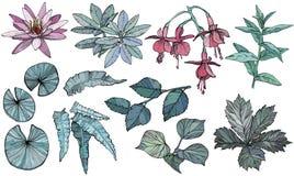 Fije las flores y las hojas, elementos exhaustos de la planta del diseño de la mano libre illustration