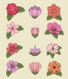 Fije las plantas de las flores con estilo de las hojas y de los pétalos ilustración del vector