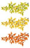 Fije las ramas con las hojas de otoño stock de ilustración