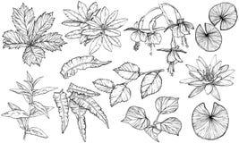 Fije las ramas y las hojas, elementos exhaustos de la planta del diseño de la mano libre illustration