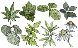 Fije las ramas y las hojas, elementos exhaustos del diseño de la mano stock de ilustración
