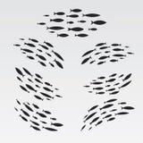 Fije las siluetas de grupos de peces de mar Colonia de pequeños pescados Icono con exactores del río Fotos de archivo libres de regalías