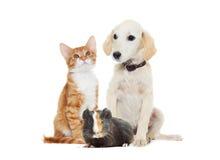 Fije los animales domésticos Imagen de archivo libre de regalías