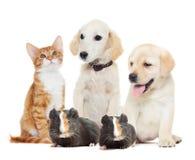 Fije los animales domésticos Fotografía de archivo libre de regalías