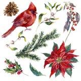 Fije los elementos de la Navidad de la acuarela del vintage del acebo Foto de archivo libre de regalías