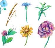Fije los elementos florales aislados Imagenes de archivo