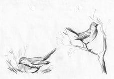 Fije los gorriones del dibujo de lápiz Ilustración Imagen de archivo