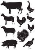 Fije los iconos del vector con los animales y los pájaros del campo Foto de archivo