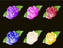 Fije seis rosas Fotos de archivo