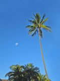 Fiji. An view. Green palm and moon agains the blue sky Royalty Free Stock Images