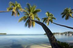 fiji att luta som är Stillahavs-, gömma i handflatan södra trees arkivfoto