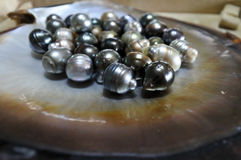 Fiji Black lip oyster shell with selection of black pearls Stock Photography