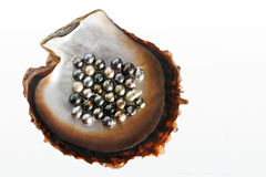 Fiji Black lip oyster shell with selection of black pearls Royalty Free Stock Photos