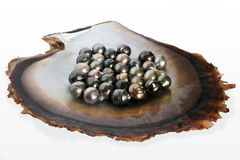 Fiji Black lip oyster shell with selection of black pearls Stock Photo