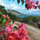 Fiji Blooming Bougainvillea. Blooming Bougainvillea encompassing the volcanic coastlines in Ba, Fiji. June 1, 2015 Royalty Free Stock Photo