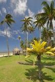Fiji coral coast Stock Image