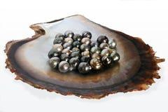 Fiji enegrece o shell de ostra do bordo com seleção de pérolas pretas Foto de Stock