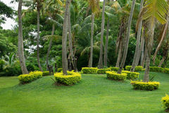 Fiji Garden Art. Rings of tropical flora are neatly trimmed as surrounds for Coconut trees - natural garden art in Fiji Stock Photo