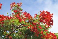 Fiji Island, Royalty Free Stock Image