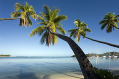 Fiji - Leaning Palm Trees - South Pacific. Palm trees leaning over a tropical lagoon in the Yasawa Islands of Fiji in the South Pacific stock photo