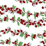 Fiji okwitni?cie, ilustracja Tagimaucia kwiat lub Medinilla Waterhousei, Krajowy kwiat Fiji ilustracji