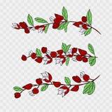 Fiji okwitni?cie, ilustracja Tagimaucia kwiat lub Medinilla Waterhousei, Krajowy kwiat Fiji ilustracja wektor