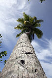 fiji palmträd Arkivbilder