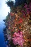 Fiji subaquático Imagem de Stock Royalty Free