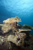 Fiji subaquático Imagens de Stock Royalty Free