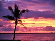 Fiji Royalty Free Stock Photo