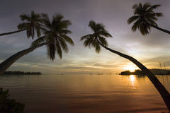 Fiji - Tropical Sunset - South Pacific. Palm trees leaning over a tropical beach at Musket Cove in the Yasawa Islands of Fiji in the South Pacific royalty free stock photography