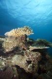 fiji underwater Obrazy Royalty Free