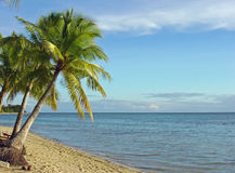 Fijian Beach and Palm Trees Royalty Free Stock Images