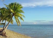 Fijian Beach and Palm Trees. At Plantation Island resort Malolo Island, Fiji Royalty Free Stock Images