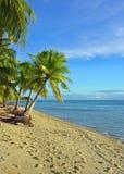 Fijian Beach and Palm Trees. At Plantation Island resort Malolo Island, Fiji Royalty Free Stock Image