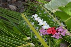 Fijian food Lovo in Fiji Islands Royalty Free Stock Photography