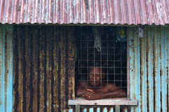 Fijian man looks out of the window during a Tropical Cyclone Royalty Free Stock Image