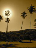 Fijian Palm Trees. Picture of the sun behind a palm tree in fiji at a resort Stock Images