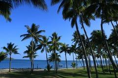 Fijian Palm Trees Stock Photo