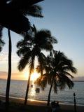 Fijian-Strand-Palmen Lizenzfreie Stockfotografie