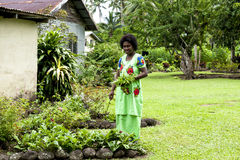 Fijian Woman gardening Stock Photography