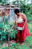 Fijian Woman Gathering Food Royalty Free Stock Photography