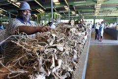Fijianmanförsäljningen rotar av pepparväxten i den van vid marknaden royaltyfri bild