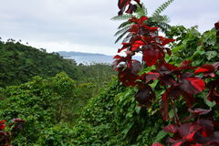 Fijiansk rainforest Arkivfoto