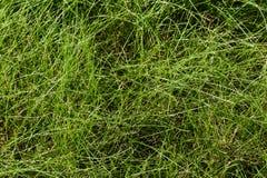 Fijn lang gras stock foto's