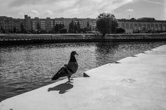 Fijne kunstfotografie: cityscape van de stads in tegenstelling zwart-witte uitgave van Minsk wit-rusland Oud Filmeffect Royalty-vrije Stock Fotografie