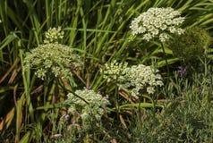 Fijne Patronen en Texturen van Groene Vegetatie stock foto