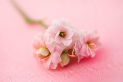 Fijne roze bloemen Stock Foto
