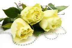 Fijne rozen Royalty-vrije Stock Foto