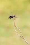 Fikcyjny dragonfly Zdjęcie Stock